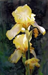 Iris #2