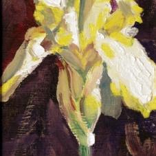 Iris #2 - Yellow
