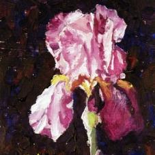 Iris #3 - Purple