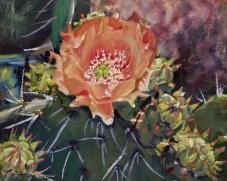 Todd's Cactus